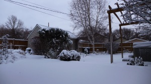 Canadian Winter - First Snowfall